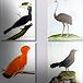 Глоссарий по орнитологии и экологии (английский, испанский)